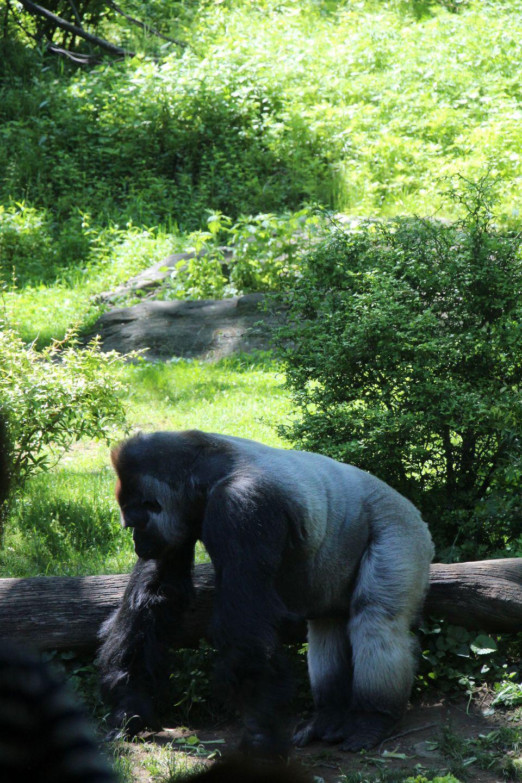 bronx zoo may 27 2013 and last day city job 133