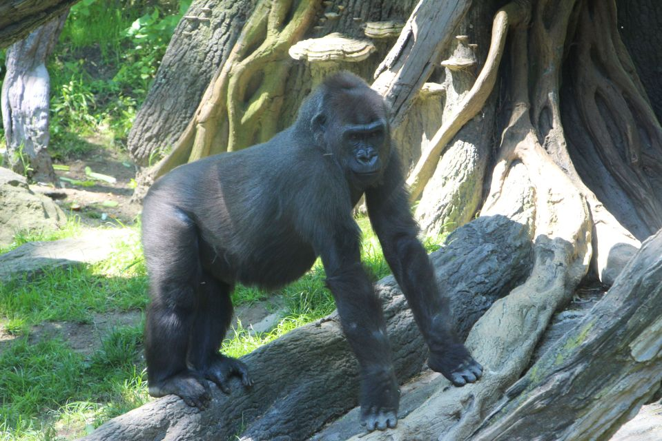 bronx zoo may 27 2013 and last day city job 138