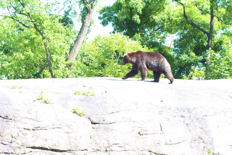 bronx zoo may 27 2013 and last day city job 370